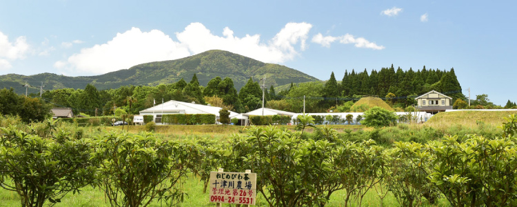 十津川農場の外観